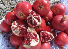 Pomegranate Festival 2009